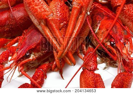 juicy red crawfish with large claws isolated on white background.