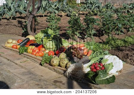 vegetables on the floor in an orchard with daylight