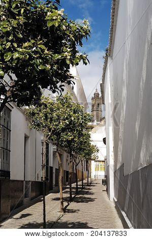 White Houses With Church In The Background In Medina Sidonia,
