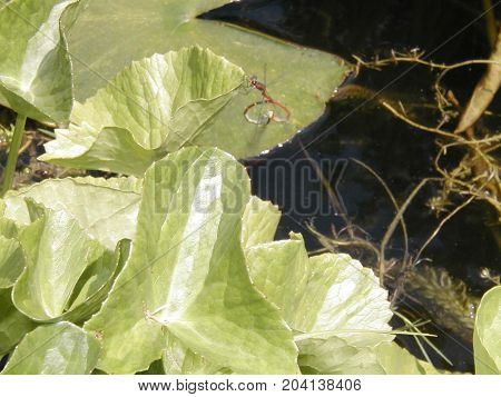 Insects In Garden Pond