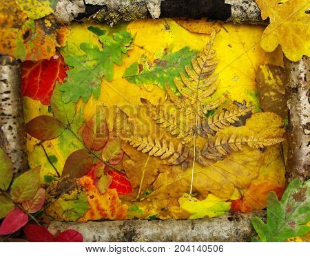 Background of old wooden sticks and fallen leaves.