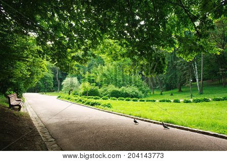 Pedestrian path in the summer green city park on a background of lush foliage of trees