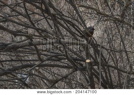 Bird on a tree without leaves. Bird on a branch without leaves