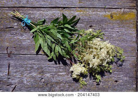 Meadowsweet Filipendula ulmaria medical herbs bunch on old wooden background