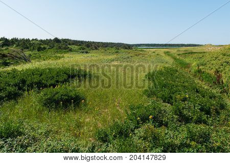 Grass-covered sand dunes Cavendish Beach Prince Edward Island Canada