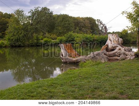 Still life with a river in which the forest is mirrored. On the banks of the river there are stunned stumps of old oak. The background is a blue sky with white clouds.