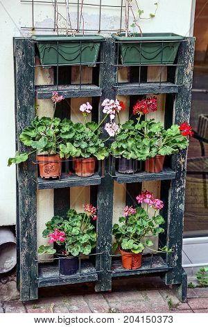 flowerpots with flowers and plants on a wooden shelf near the wall