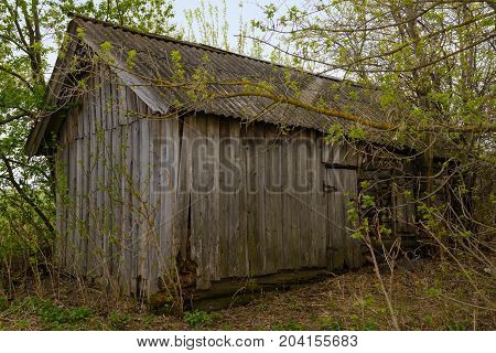 old wooden lumbering shed between the trees