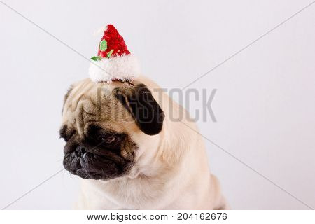 Very Sad Dog Pug With Christmas Hat On The White Ground. Isolated