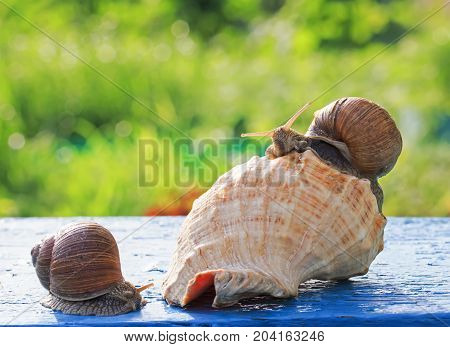 two cute funny snail crawled to celebrate a housewarming party in the beautiful new sea shell