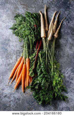 Bundle of fresh organic carrot, parsnip with haulm and chard mangold over gray texture background. Top view with space