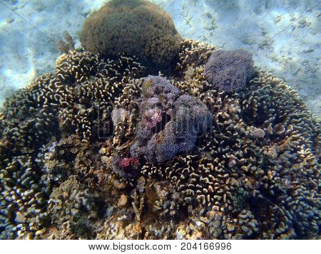 Beautiful seaview with corals and in Indonesia