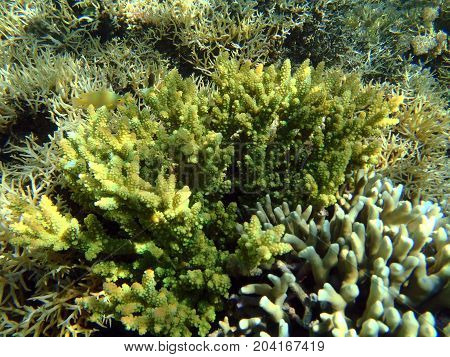 colorful seaview with acropora corals and fishes