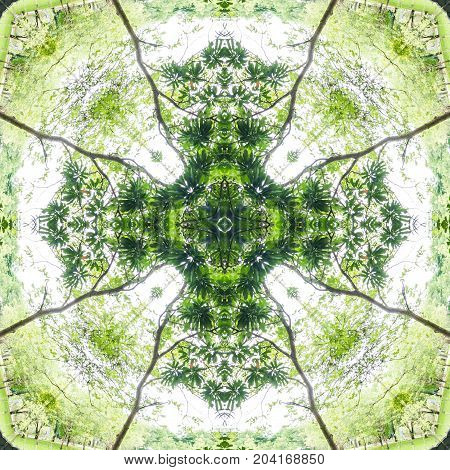 abstract green pattern background mandala kaleidoscope green concept