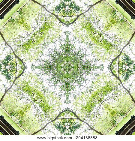 abstract green pattern background , mandala kaleidoscope , green concept