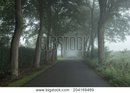 Country Road In The Mist With Trees Along Both Sides.