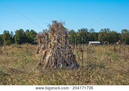 Corn Shocks in the early fall. This is a practice performed by the amish to dry field corn in the field.