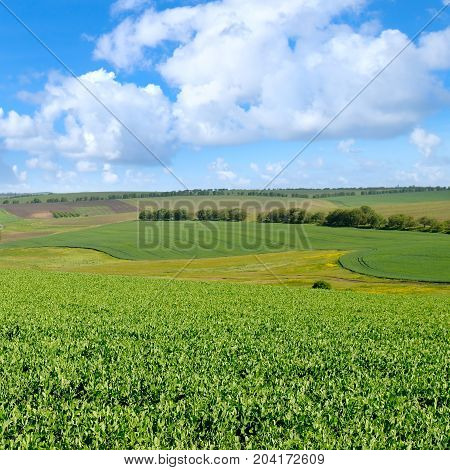 A picturesque green field and blue sky