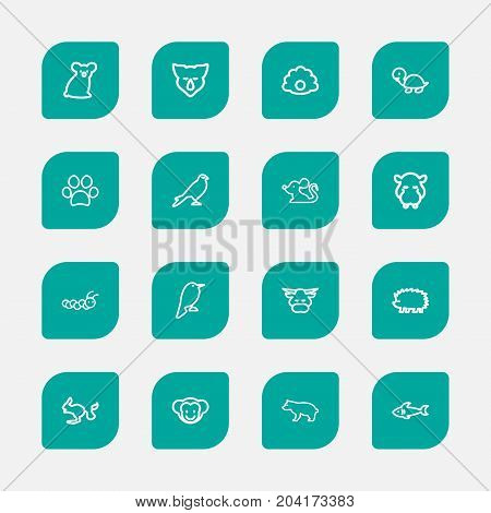 Set Of 16 Editable Zoology Outline Icons. Includes Symbols Such As Sloth, Hawk, Predator And More