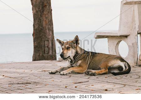 Brown homeless dog sleep on the floor