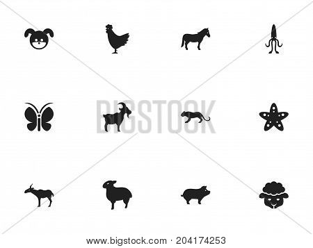 Set Of 12 Editable Zoology Icons. Includes Symbols Such As Lamb, Octopus, Stallion And More