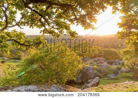 Sunset framed but branches. Taken on summers evening on Dartmoor National Park, Devon,UK.