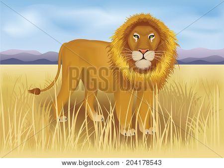 Wild african lion in savanna between mountains