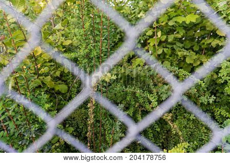 plant seen through metal fence abstract view