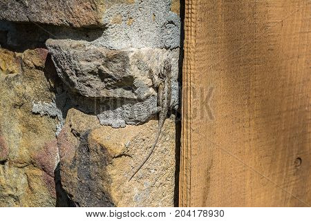 An abstract capture of a small lizard climbing a stone wall.