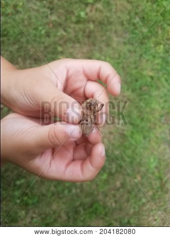 a child's hands gently holding a cicada skin