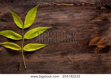 Old wooden background with green floral leaf - space for text