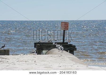 A group of seagulls on a culvert at the beach.