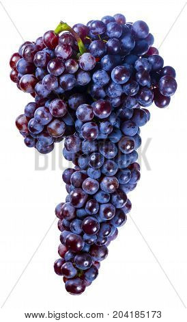 Beautiful Blue Grapes Large Bunch Isolated On White Background