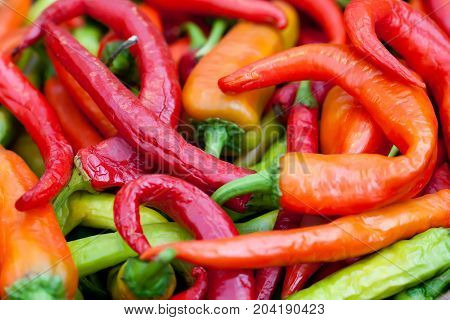 Colorful hot peppers harvest. Beautiful green red orange vegetables selective focus photography. Up view shallow depth of field.