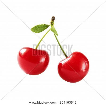 Two juicy red cherry berries with petioles and leaves isolated on a white background closeup