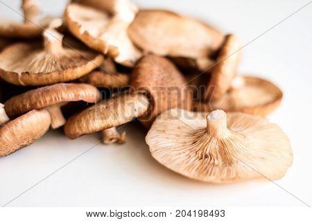 Fresh Mushrooms Ki Ki On A White Kitchen Table.