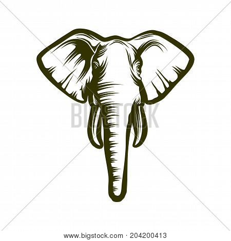 Head of elephant on white background, vector illustration