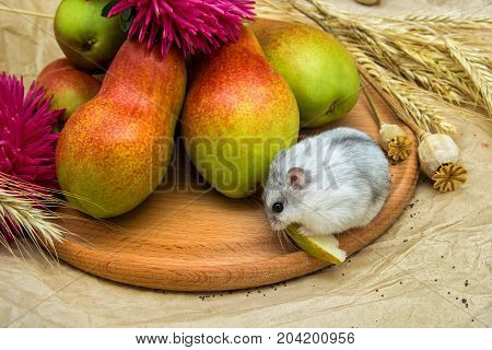 chipmunk hamster with pears, poppy seeds, wheat on paper and wood background