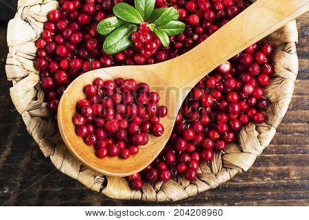 Fresh ripe forest northern cranberries or cowberry, lingonberry in ceramic cups of different size and color on a gray stone aged background for the concept of organic natural healthy food. Top View