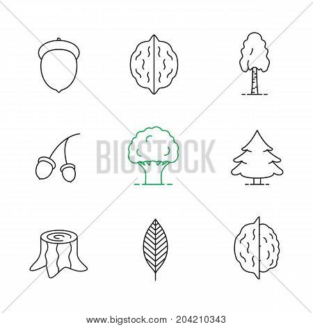 Forestry linear icons set. Acorns, walnut leaf, hazelnuts, birch, oak, fir trees, stump. Thin line contour symbols. Isolated vector outline illustrations