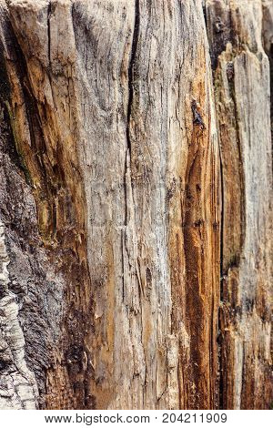 Texture old tree wood abstract background cracked wooden cross section annual growth ring
