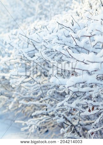 Winter landscape.Frozenned plants.Shallow depth-of-field russia  nature travel