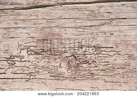 rustic wooden board weathered and gnawed by worms - close-up