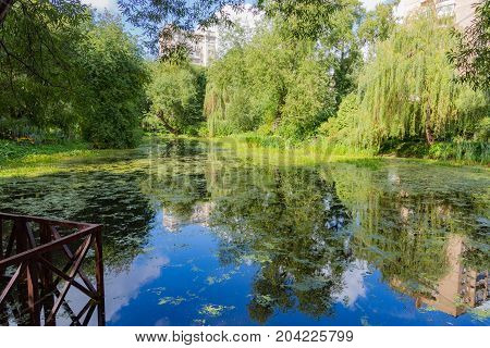 City Pond With Duckweed