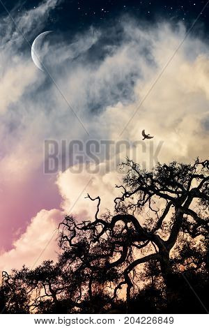 A silhouette of an old gnarled and scary looking oak tree at sunset with billowing yellow clouds a bird in flight and a crescent moon.