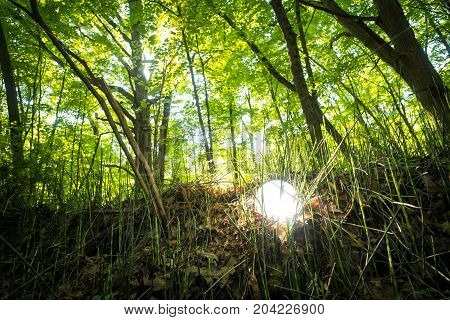 Bright glowing magic crystal ball in woods for fantasy imagery