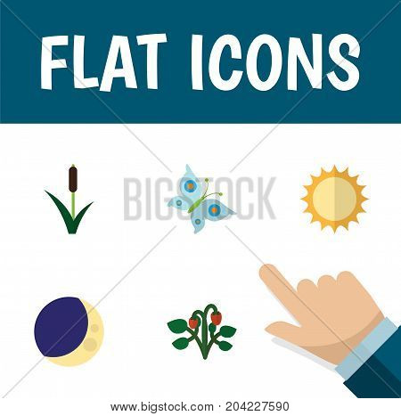 Flat Icon Bio Set Of Cattail, Solar, Half Moon And Other Vector Objects