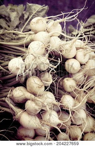 Vintage look pile of turnips at the market