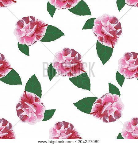Rose camelia hand drawn pattern on white.