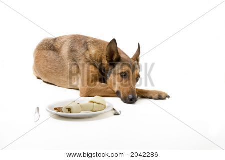 Belgian Malinois With Great Dog Diner
